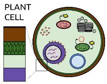 Plant Cell Organelles