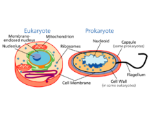 01-Prokaryotic and Eukaryotic Cells