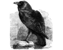 "Tier 2 Words ""The Raven"" Edgar Allen Poe"