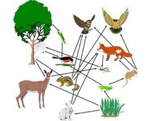 Food Chains and Food Webs (Period 5)