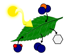 Photosynthesis - Elementary