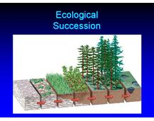 13 - Ecological Succession